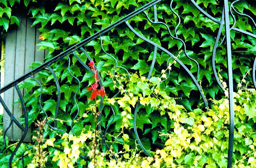 Rampe végétale